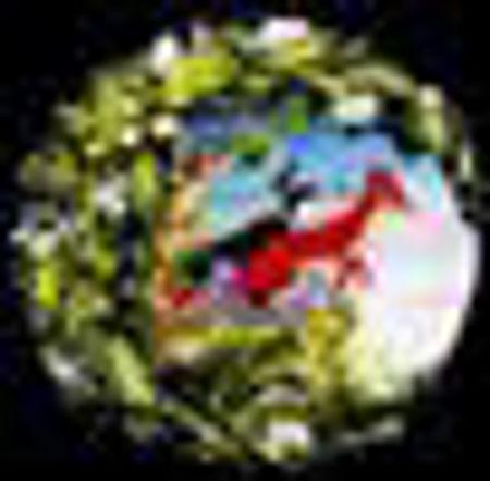 Image de la catégorie Les animaux du Bois de Quat'Sous